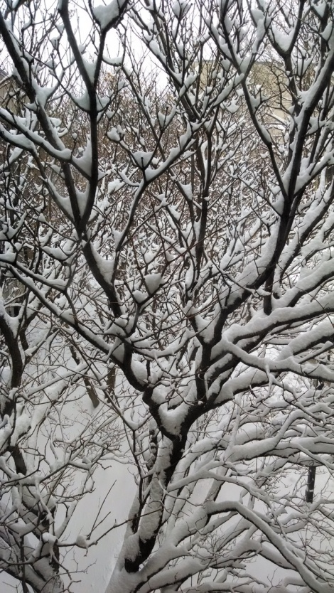 snow in tree
