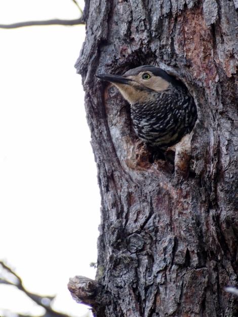 A less menacing avian onlooker