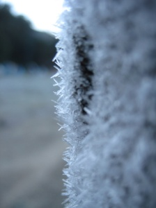 Frost on a hat left out overnight